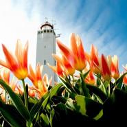 noordwijk-place2beach-appartement-vuurtoren-tulpen